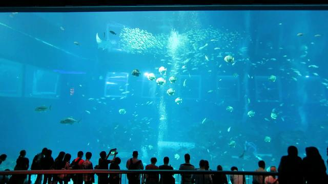 Worlds Largest Aquarium