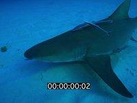 2012 11 BAHAMAS 9878