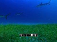 2012 11 BAHAMAS 9870