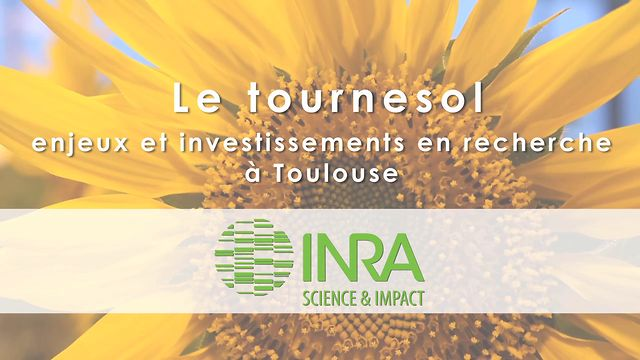 Projet Tournesol - INRA