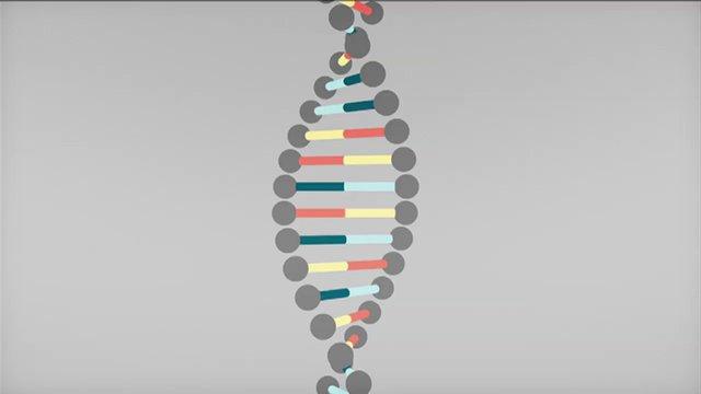 BBC Knowledge Explainer DNA