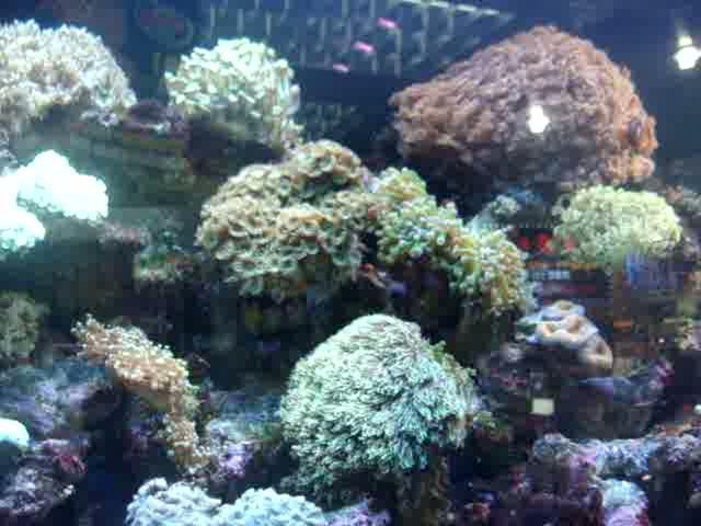 My Dream Aquarium On Vimeo