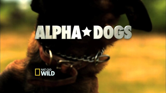 Nat Geo Wild: Alpha Dogs