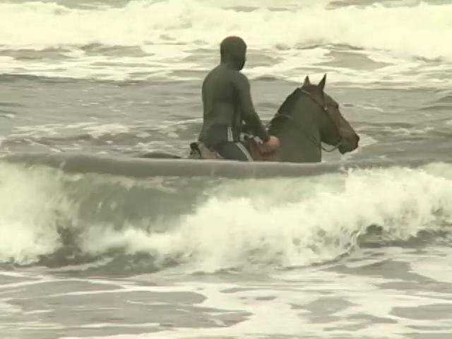 En Tranaquepe, VIII Región, se desarrolla una pesca muy particular de orilla donde son los caballos los principales colaboradores.