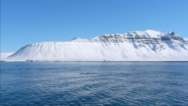 Iceland 2013 - Orcas @ Grundarfjörður on Snæfellsnes