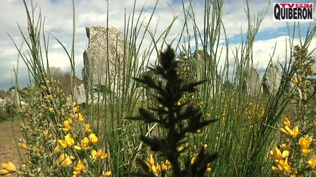 Carnac stones  - Le printemps des Menhirs de Carnac - TV Quiberon 24/7