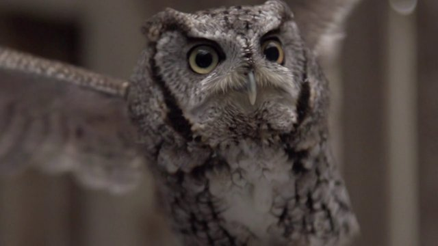 Slow Motion Owls at the Cleveland Museum of Natural History