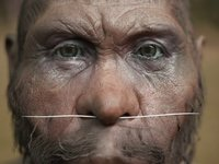 3D forensic facial reconstruction of a Homo Georgicus (-1.8My)