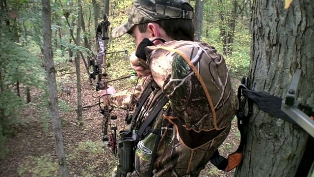 Deer Hunting With Dogs Uk