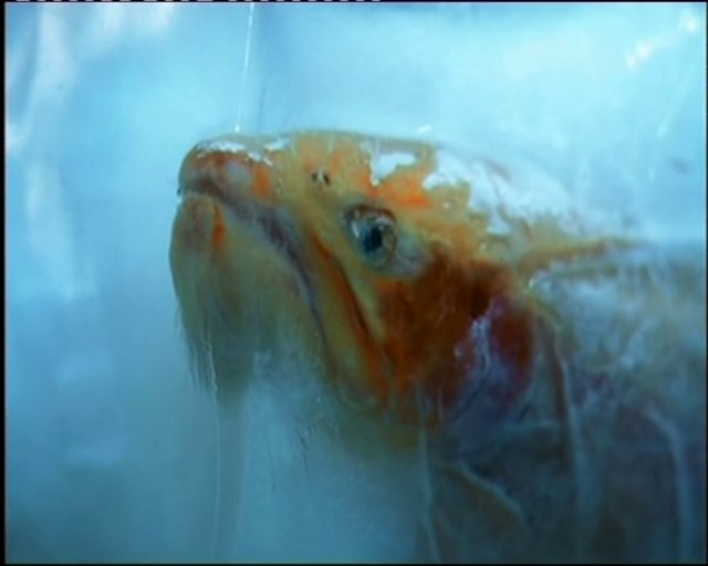 Of all the fish in the sea on vimeo for All the fish in the sea