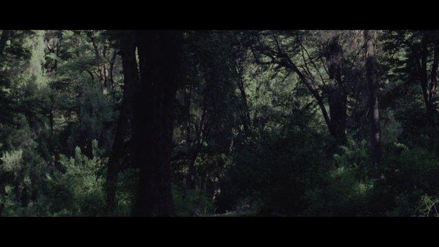 LEONES - trailer beta
