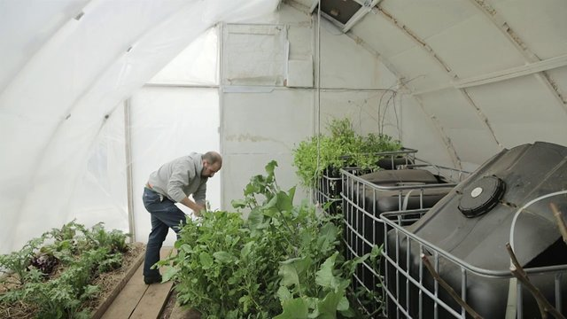 Growing food with zero heating in Massachusetts winter