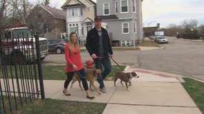 Thumbnail image for 'Chicago Blackhawk Bryan Bickell Walks the Walk for Pit Bulls'