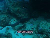 2012 09 MAURITIUS 4033