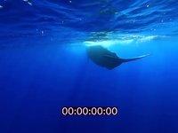 2012 09 MAURITIUS 4341