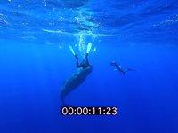 2012 09 MAURITIUS 4471