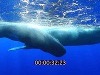 2012 09 MAURITIUS 4473