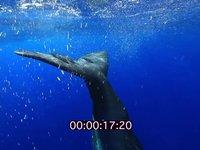 2012 09 MAURITIUS 4461