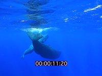 2012 09 MAURITIUS 4476