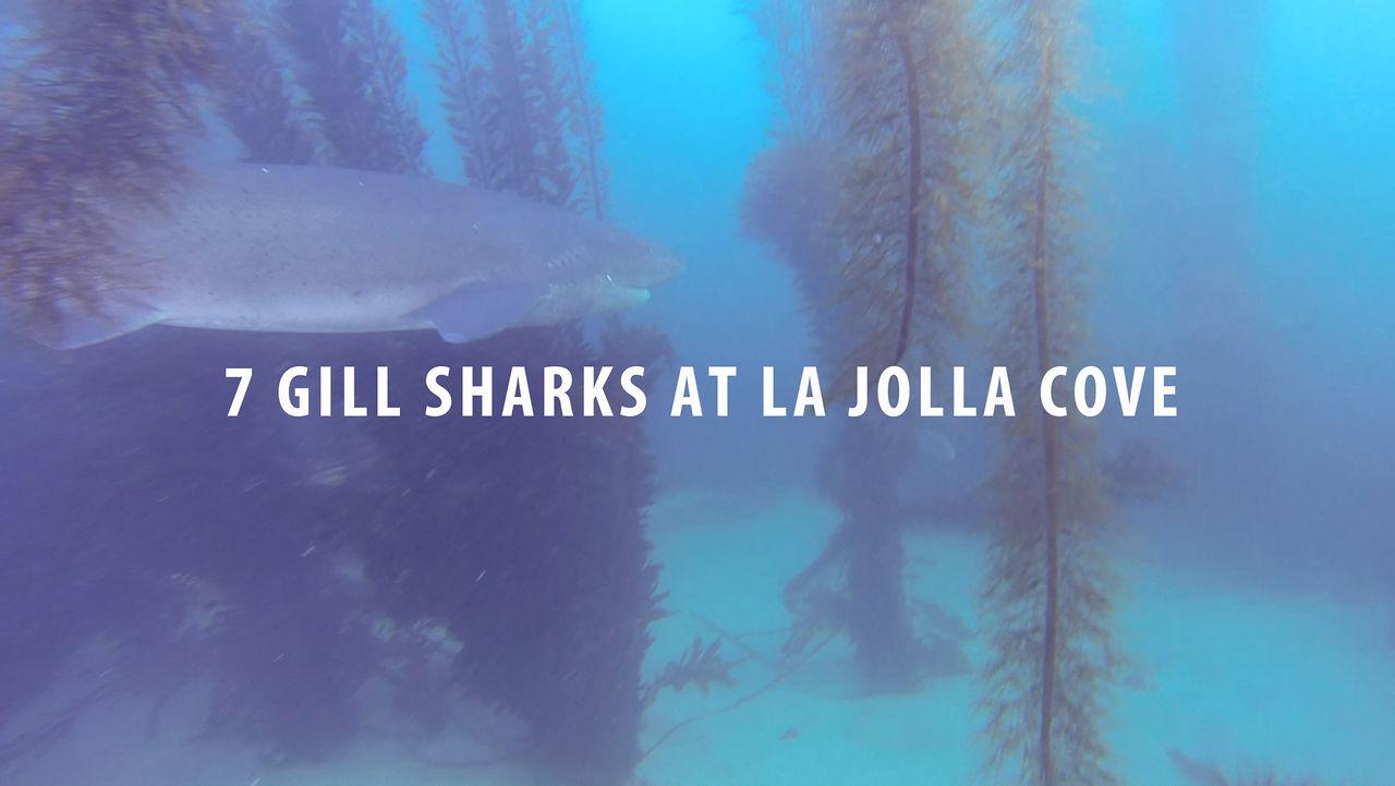 La Jolla Cove Suites Hotel Impobible