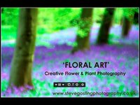 2013-01-31 17.00 Steve Gosling presents Floral Art creative flower plant photography