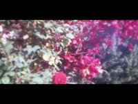 Lomokino movie rocco & roses (00:24)