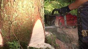 Rold skov natur- og kulturcenter