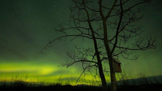 The Yukon's Northern Lights