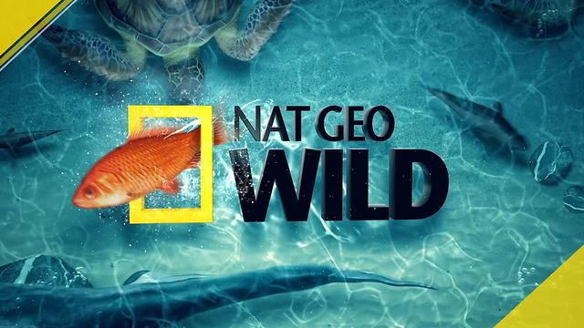 Nat geo wild fish tank kings on vimeo for Fish tank kings