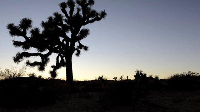 The Joshua Tree National Park Experience