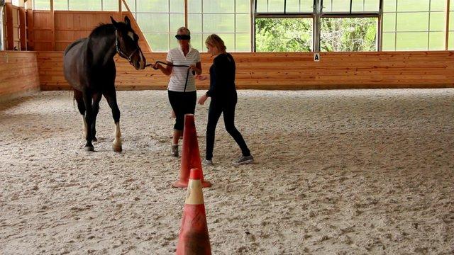 Equine Therapeutic Alliance