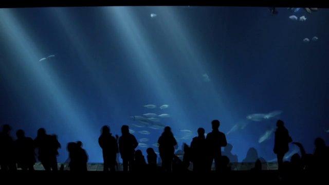 Monterey Bay Aquarium - Blue Dream