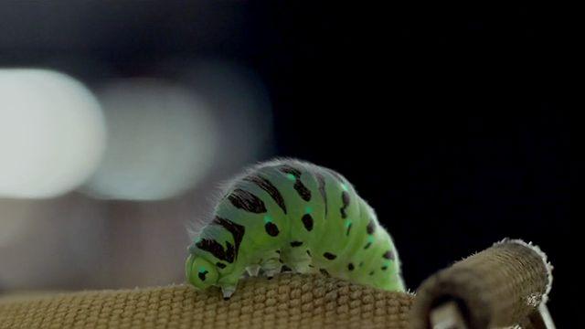 【跟著毛毛蟲壯遊歐洲 Caterpillar】【Yao】