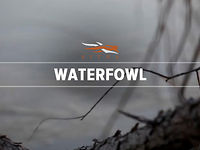 Introducing our 2012 Waterfowl Line