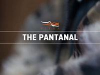Pantanal Series