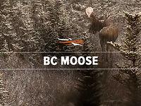 BC Moose