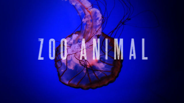 ZOO ANIMAL | Documentary