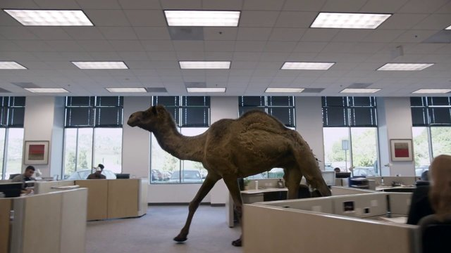 GEICO Camel Commercial Hump Day