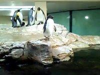 Pinguine (00:42)
