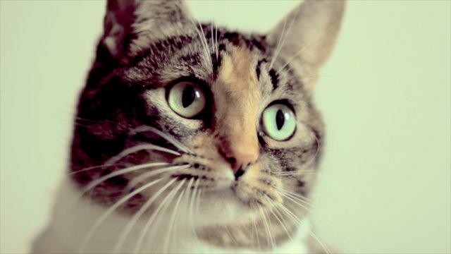 Le Femme, Le Meow