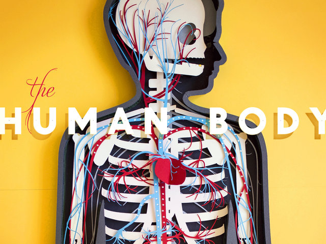 """""""El cuerpo humano"""", una aplicación educativa de Tinybop"""