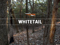 Whitetail 2013 Montage