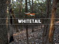 Whitetail 2013 Montage