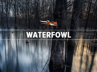 Waterfowl 2013 Montage