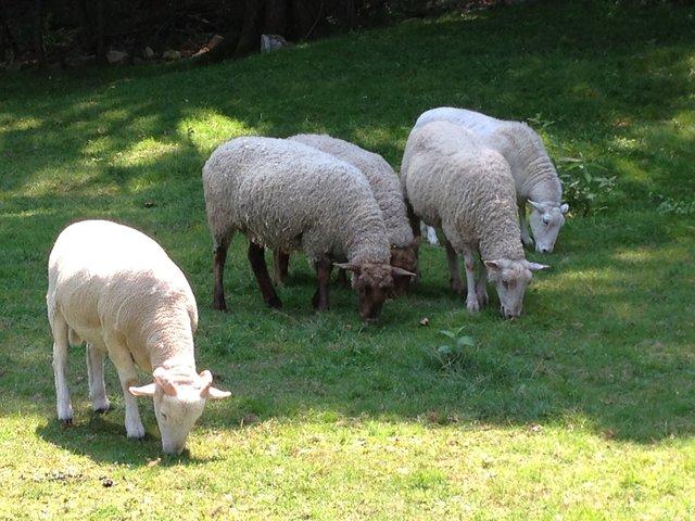 Animals at Safe Haven Farm Sanctuary