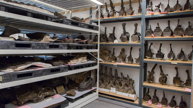 GIZMODO - Big Bone Room at the American Museum of Natural History