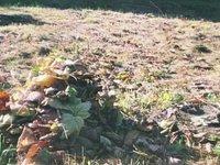 Leaves (00:30)