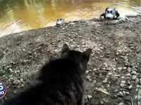 cat-gator