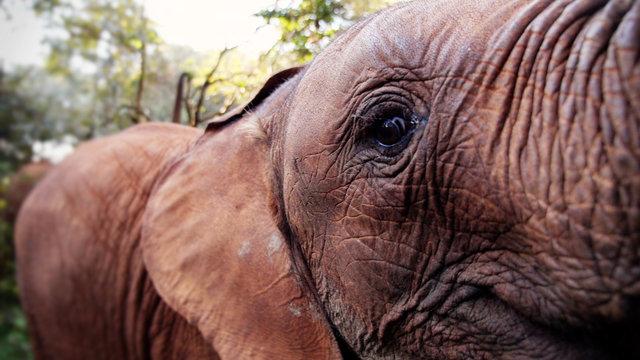 WILD :: Kenya's Elephants and The David Sheldrick Wildlife Trust