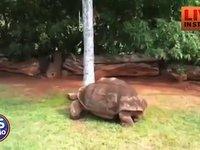 Missing turtle/Leslie vs silence